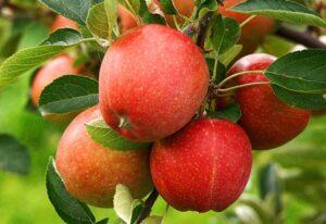 เซรั่มสำหรับแก้ผมร่วงที่ดีที่สุด - แอปเปิ้ล