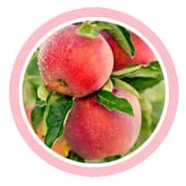 เซรั่มปลูกผม สเต็มเซลล์จากแอปเปิ้ล แก้ผมร่วง H Balanze Serum